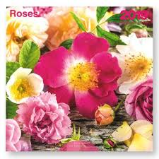 CALENDRIER 2019 ROSES  30X30